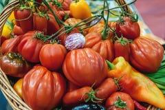 Gli agricoltori raccolgono i peperoni ed i pomodori della melanzana in un canestro nel giardino organico alla conclusione dell'es Fotografia Stock Libera da Diritti