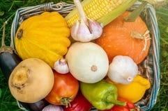 Gli agricoltori raccolgono le verdure differenti nella fine dell'estate nel giardino organico Alimento sano e sostenibile Immagine Stock