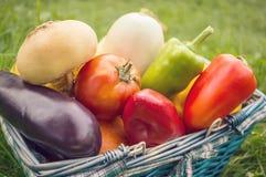 Gli agricoltori raccolgono le verdure differenti nella fine dell'estate nel giardino organico Alimento sano e sostenibile Autunno Fotografie Stock Libere da Diritti