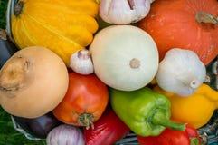 Gli agricoltori raccolgono le verdure differenti nella fine dell'estate nel giardino organico Alimento sano e sostenibile Autunno Immagine Stock