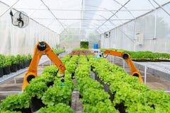 Gli agricoltori robot astuti raccolgono nell'automazione futuristica del robot dell'agricoltura per lavorare la tecnologia fotografia stock