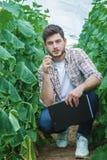 Gli agricoltori sono coltivanti e raccoglienti le verdure Immagine Stock Libera da Diritti
