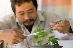 Gli agricoltori sono piante dell'analisi Immagine Stock Libera da Diritti