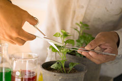 Gli agricoltori sono piante dell'analisi Immagine Stock