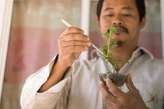 Gli agricoltori sono piante dell'analisi Fotografie Stock