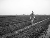 Gli agricoltori spruzzano i diserbanti ai campi recentemente coltivare del fagiolo Fotografia Stock Libera da Diritti