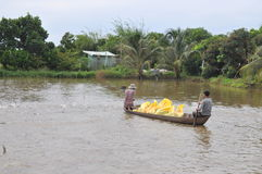 Gli agricoltori stanno alimentando il pesce gatto di pangsius nel loro stagno nel delta del Mekong del Vietnam Fotografia Stock