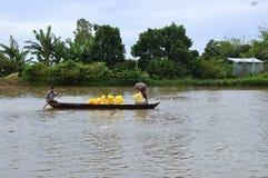 Gli agricoltori stanno alimentando il pesce gatto di pangsius nel loro stagno nel delta del Mekong del Vietnam Immagini Stock Libere da Diritti