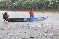 Gli agricoltori stanno alimentando il pesce gatto di pangsius nel loro stagno nel delta del Mekong del Vietnam Fotografia Stock Libera da Diritti