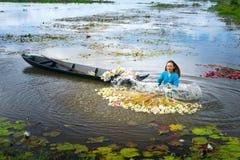 Gli agricoltori stanno pulendo i gigli dopo il raccolto sotto le paludi nella stagione dell'inondazione Immagine Stock