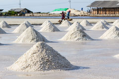 Gli agricoltori stanno raccogliendo il sale nei giacimenti del sale Fotografie Stock