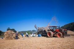 Gli agricoltori stanno raccogliendo il seme del riso Immagine Stock Libera da Diritti