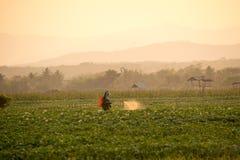 Gli agricoltori stanno spruzzando gli antiparassitari nei giacimenti della patata Fotografia Stock Libera da Diritti