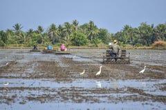 Gli agricoltori tailandesi contribuiscono a utilizzare il trattore dell'attrezzo nel giacimento del riso Fotografia Stock