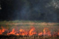 Gli agricoltori tailandesi stanno bruciando la paglia Fotografia Stock
