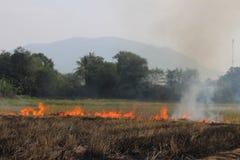 Gli agricoltori tailandesi stanno bruciando la paglia Fotografie Stock