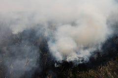 Gli agricoltori tailandesi stanno bruciando la paglia Immagine Stock