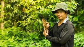 Gli agricoltori tailandesi stanno prendendo la cura di produzione agricola Immagine Stock Libera da Diritti