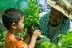 Gli agricoltori tailandesi stanno prendendo la cura di produzione agricola Immagini Stock