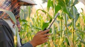 Gli agricoltori usano la tecnologia per aiutare le informazioni agricole record stock footage