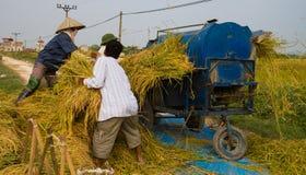 Gli agricoltori vietnamiti del nord hanno messo il raccolto in thrasher Immagini Stock