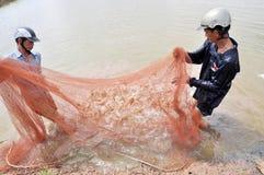 Gli agricoltori vietnamiti stanno raccogliendo i gamberetti dal loro stagno con una rete da pesca ed i piccoli canestri nella cit Immagini Stock Libere da Diritti