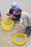 Gli agricoltori vietnamiti stanno raccogliendo i gamberetti dal loro stagno con una rete da pesca ed i piccoli canestri nella cit Fotografia Stock Libera da Diritti
