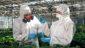 Gli agronomi stanno lavorando con le piante ed i prodotti chimici stock footage