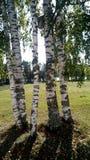 Gli alberi Fotografia Stock