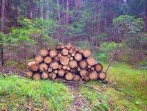 Gli alberi Fotografie Stock