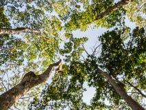 Gli alberi Immagini Stock