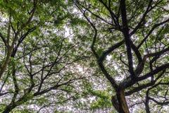 Gli alberi Immagine Stock