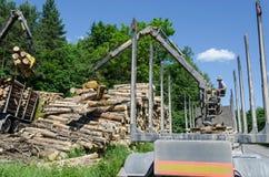 Gli alberi abbattuti carico dell'uomo registra con la gru al rimorchio Fotografie Stock Libere da Diritti