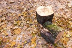 Gli alberi abbattuti e collega il parco di autunno su un fondo delle foglie gialle Fotografia Stock Libera da Diritti