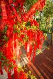 Gli alberi alti completamente è decorato con i nastri rossi molti nastri rossi legati agli alberi l'asia Fotografia Stock
