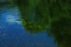 Gli alberi & le erbe hanno riflesso nel fiume Fotografia Stock