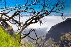 Gli alberi asciutti più irrompono le montagne del Madera Immagine Stock