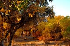 Gli alberi in autunno Fotografie Stock Libere da Diritti