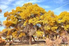 Gli alberi in autunno Fotografia Stock