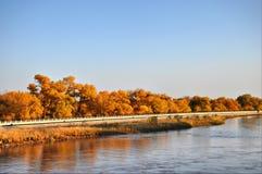 Gli alberi in autunno Fotografie Stock