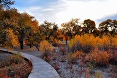 Gli alberi in autunno Immagini Stock Libere da Diritti