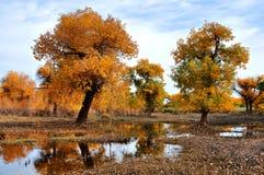 Gli alberi in autunno Fotografia Stock Libera da Diritti