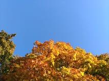 Gli alberi, autunno colora il gioco, sleale blu immagine stock libera da diritti