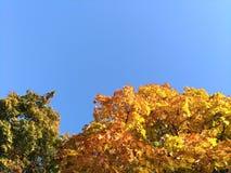 Gli alberi, autunno colora il gioco, sleale blu immagini stock libere da diritti