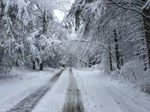Gli alberi caduti sulla strada nell'inverno infuriano Quinn Immagine Stock
