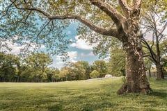 Gli alberi in Central Park, posto famoso in New York fotografie stock