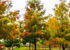 Gli alberi che cambiano i colori come autunno si muove dentro Fotografia Stock