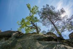 Gli alberi che crescono sopra la roccia in sole rays Fotografie Stock