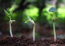 Gli alberi che crescono sul suolo fertile nella germinazione ordinano/che crescono Immagini Stock