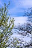 Gli alberi cominciano nuova stagione al proprio tasso Fotografia Stock